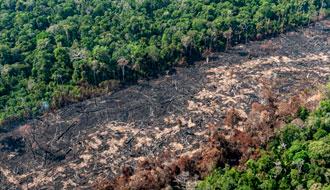 Número de queimadas na Amazônia cai enquanto desmatamento dispara
